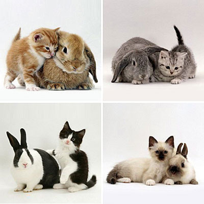 a bunny and a kitty. KITTIES AND BUNNIES.